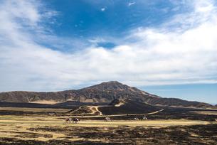 熊本県 野焼き後の草千里ヶ浜で乗馬体験の写真素材 [FYI04823692]