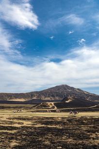 熊本県 野焼き後の草千里ヶ浜で乗馬体験の写真素材 [FYI04823693]