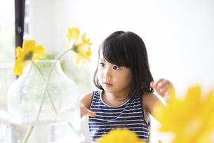 黄色いお花を花瓶に生けている女の子の写真素材 [FYI04823872]
