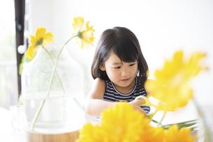 黄色いお花を花瓶に生けている女の子の写真素材 [FYI04823873]