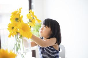 黄色いお花を花瓶に生けている女の子の写真素材 [FYI04823878]