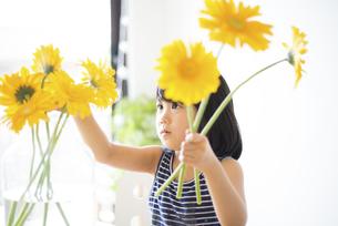 黄色いお花を花瓶に生けている女の子の写真素材 [FYI04823880]
