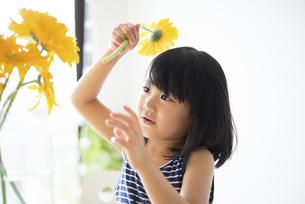 黄色いお花を花瓶に生けている女の子の写真素材 [FYI04823881]