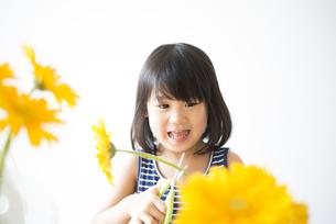 黄色いお花を切っている女の子の写真素材 [FYI04823883]