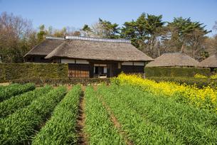 房総のむら麦畑と上総の農家の写真素材 [FYI04823927]