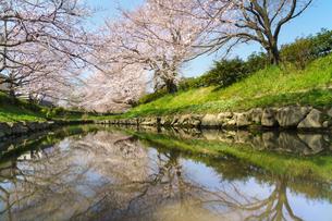 吹上の桜並木と元荒川の写真素材 [FYI04823967]