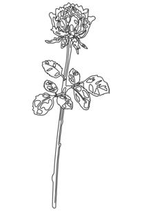 一輪の薔薇の線画のイラスト素材 [FYI04823997]