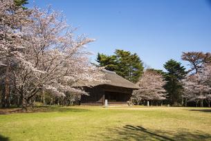 房総のむら 農村歌舞伎舞台と満開の桜の写真素材 [FYI04824049]