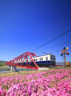 別所線千曲川橋梁を走るまるまどりーむ号と芝桜と踏切の写真素材 [FYI04824117]