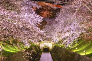 琵琶湖疎水の夜桜ライトアップ 日本 滋賀県 大津市の写真素材 [FYI04824377]