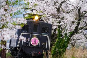 満開の桜並木を走り抜けるELさくら号の写真素材 [FYI04824388]