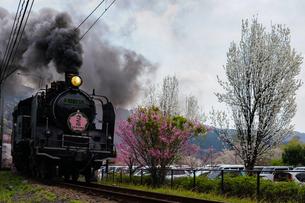黒煙を上げる大井川鐵道SLと花桃の花の写真素材 [FYI04824391]
