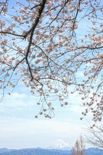 桜と青空の写真素材 [FYI04824650]