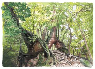 壮大な木々を緑のカーテンで覆う屋久島自然休養村のイラスト素材 [FYI04825173]