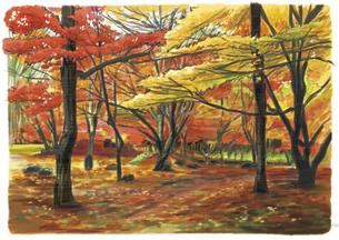 赤と黄色の空間に誘われる滑床渓谷紅葉のイラスト素材 [FYI04825174]