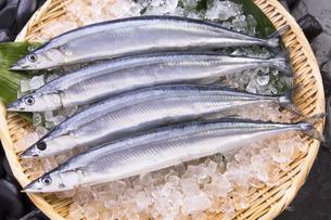 秋刀魚の写真素材 [FYI04825322]