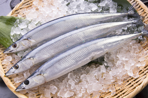 秋刀魚の写真素材 [FYI04825323]
