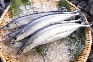 秋刀魚の写真素材 [FYI04825324]