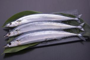 秋刀魚の写真素材 [FYI04825326]