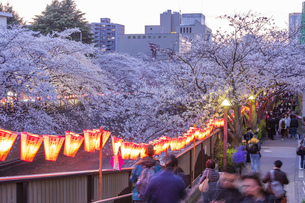 東京・目黒川の桜ライトアップの写真素材 [FYI04825644]