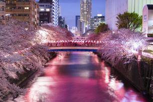 東京・目黒川の桜ライトアップの写真素材 [FYI04825646]