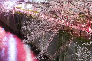 東京・目黒川の桜ライトアップの写真素材 [FYI04825647]
