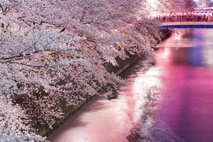 東京・目黒川の桜ライトアップの写真素材 [FYI04825648]