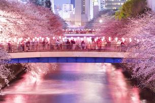 東京・目黒川の桜ライトアップの写真素材 [FYI04825649]