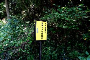 不法投棄を監視するカメラの写真素材 [FYI04825819]