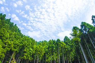 杉の森の写真素材 [FYI04825963]