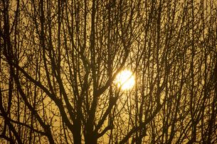 日の出の写真素材 [FYI04826097]