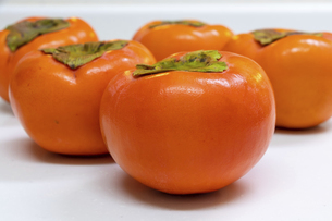 鮮やかなオレンジ色の柿の写真素材 [FYI04826924]