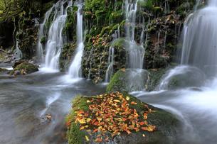 10月 紅葉の元滝  -鳥海山山麓-の写真素材 [FYI04827294]