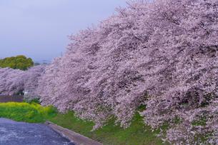 龍巌淵の春の風景の写真素材 [FYI04827350]