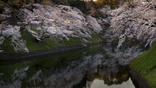 桜の写真素材 [FYI04827689]