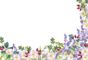 ハーブガーデンのフレーム 水彩イラストのイラスト素材 [FYI04827705]