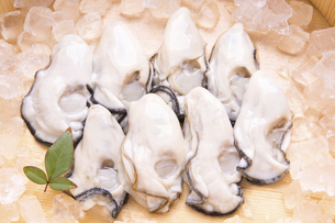 むき牡蛎の写真素材 [FYI04827786]