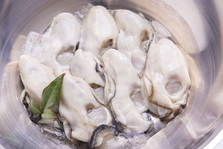 むき牡蛎の写真素材 [FYI04827787]