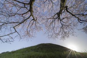 野古墳郡_不動塚古墳の桜の写真素材 [FYI04828129]