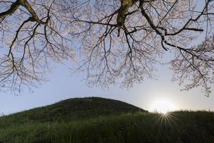 野古墳郡_不動塚古墳の桜の写真素材 [FYI04828130]