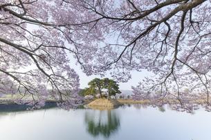六道堤の桜の写真素材 [FYI04828131]