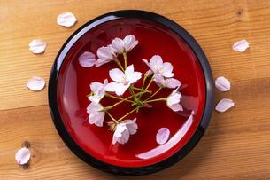 桜と和食のイメージの写真素材 [FYI04828519]