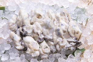 むき牡蛎の写真素材 [FYI04828546]