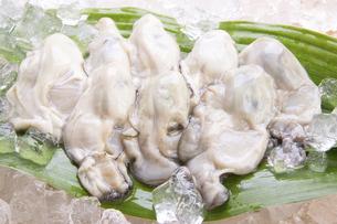 むき牡蛎の写真素材 [FYI04828547]