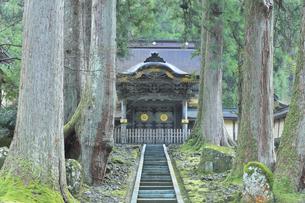 永平寺 勅使門(唐門)と杉木立の写真素材 [FYI04829299]