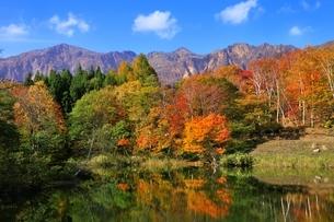 秋山郷 紅葉の天池と鳥甲山の写真素材 [FYI04829322]