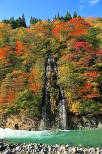 秋山郷 紅葉の中津川渓谷の写真素材 [FYI04829325]