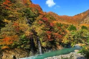 秋山郷 紅葉の中津川渓谷の写真素材 [FYI04829327]