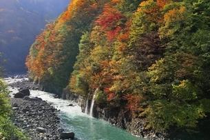 秋山郷 紅葉の中津川渓谷の写真素材 [FYI04829329]