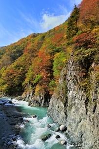 秋山郷 前倉橋より紅葉の中津川渓谷の写真素材 [FYI04829331]